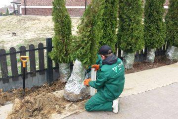Посадка и пересадка деревьев и декоративных кустарников