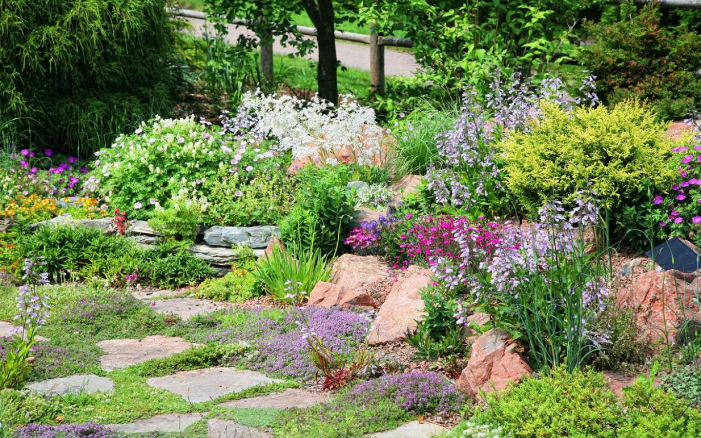 Успешное сочетание различных видов растений