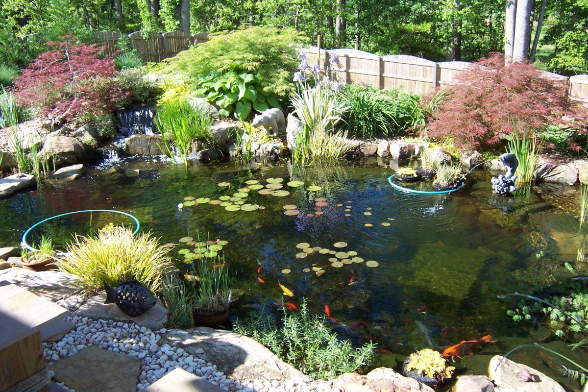 Растения для декоративных прудов