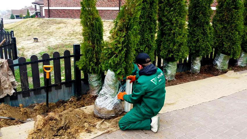 Работы по озеленению участка