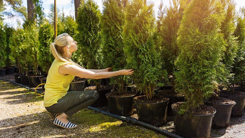 Вы можете сами выбрать деревья для посадки. Ландшафтный дизайн