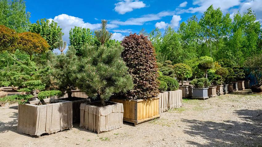 Услуги озеленения. Лучший растительный материал