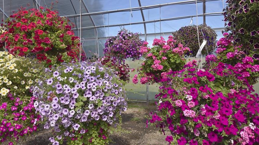 Посадка растений. Ландшафтный дизайн