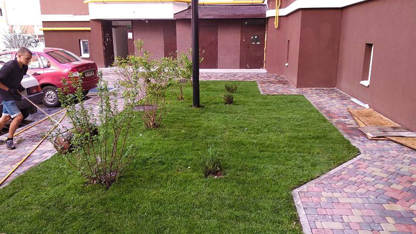 Рулонный газон в озеленении ЖК