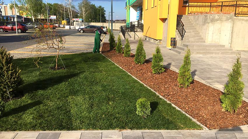 Рулонный газон в ландшафтном дизайне ЖК