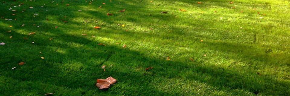 Трава будет всегда зеленее по Вашу сторону забора