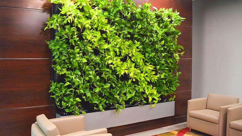 Озеленение интерьеров. Фитостены