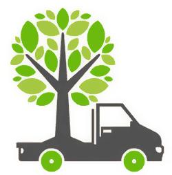 Пересадка крупномерных деревьев