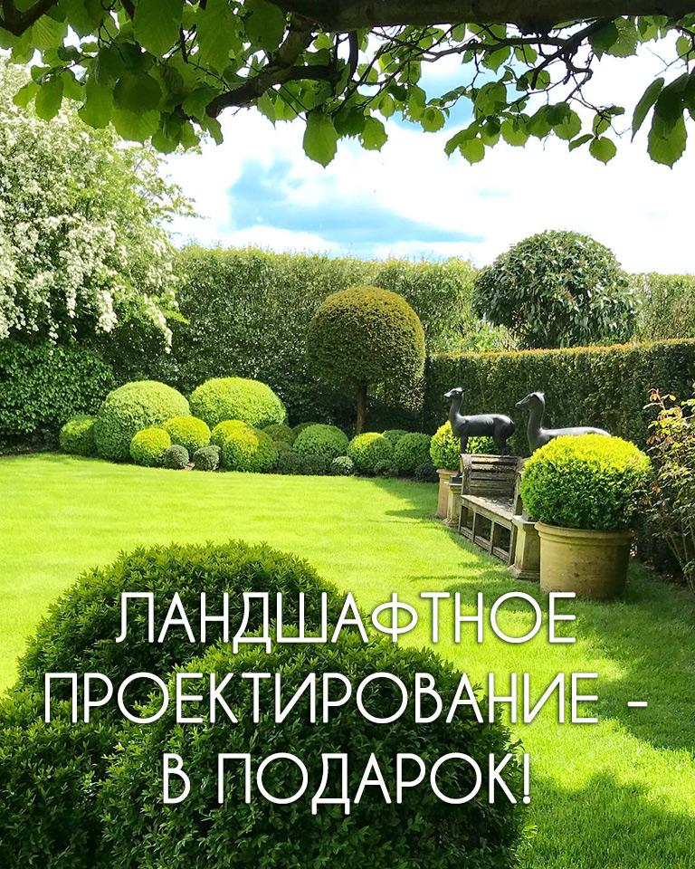 Озеленение участка Киев