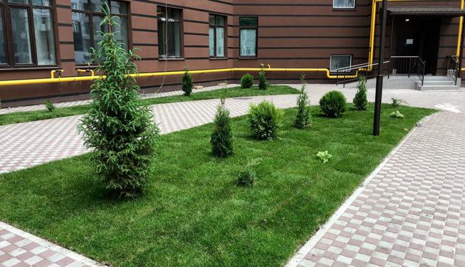 Вечнозеленые в ландшафтном дизайне жилого комплекса
