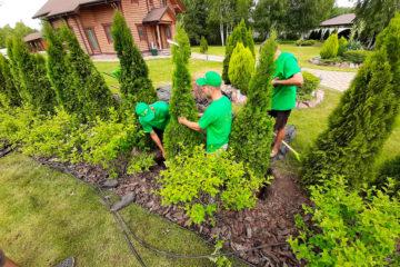 Озеленение и посадка растений