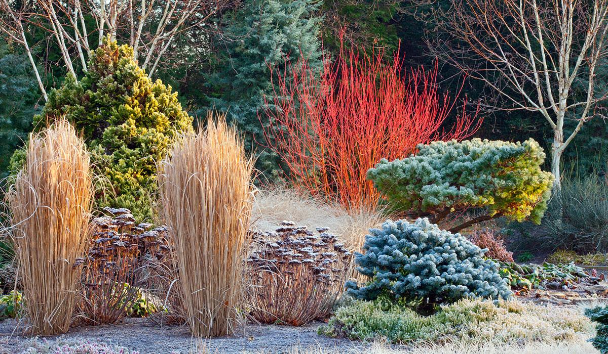 Зимний сад: выбор растений и основные принципы проектирования