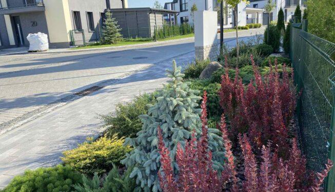 Посадка вечнозеленых растений и декоративных кустарников