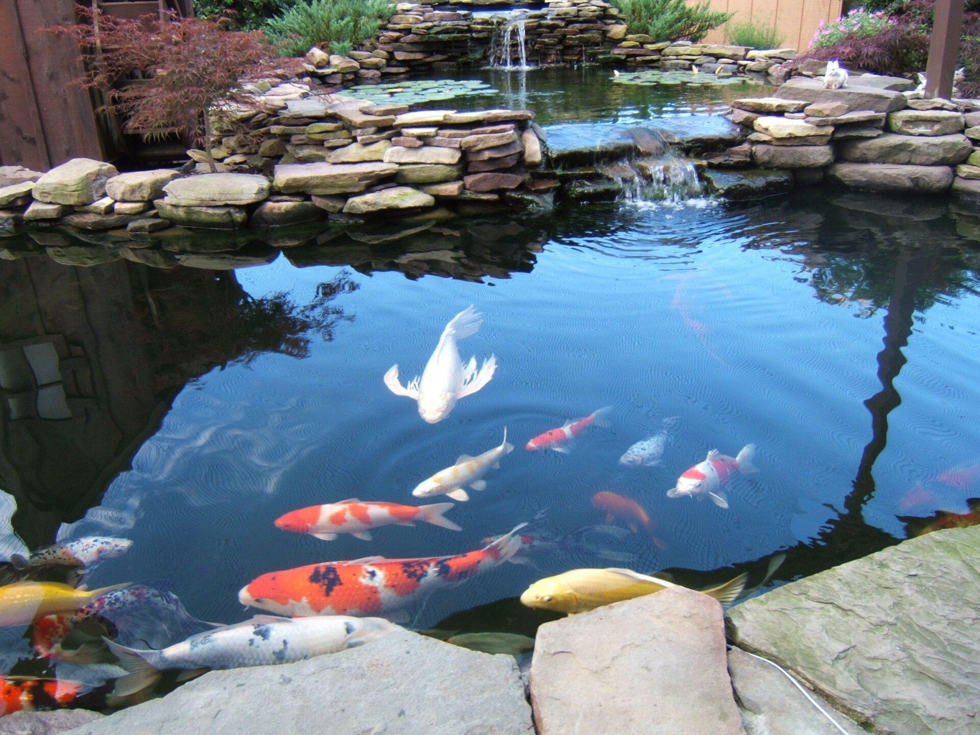 Строительство садовых прудов